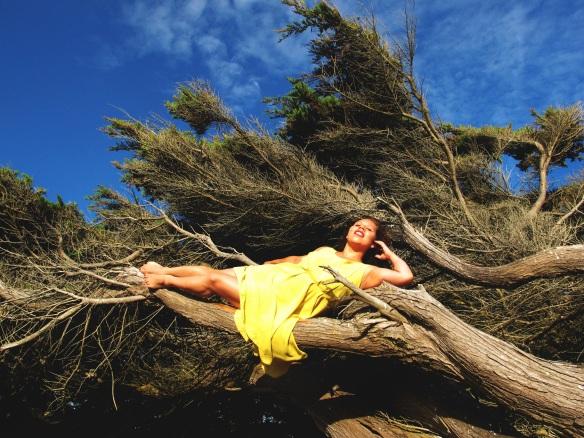 Lemon Tree (11)