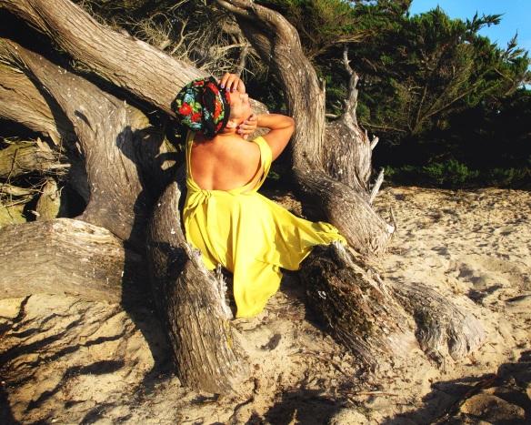 Lemon Tree (3)